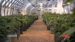 Weed - CNN Special Dr Sanjay Gupta 2013 Documentary